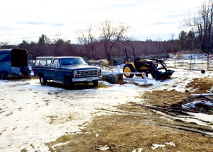 truck tractor and pheasent
